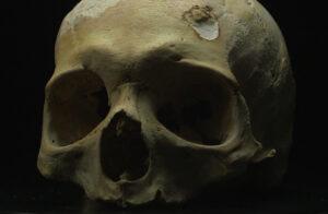 Bruto's skull