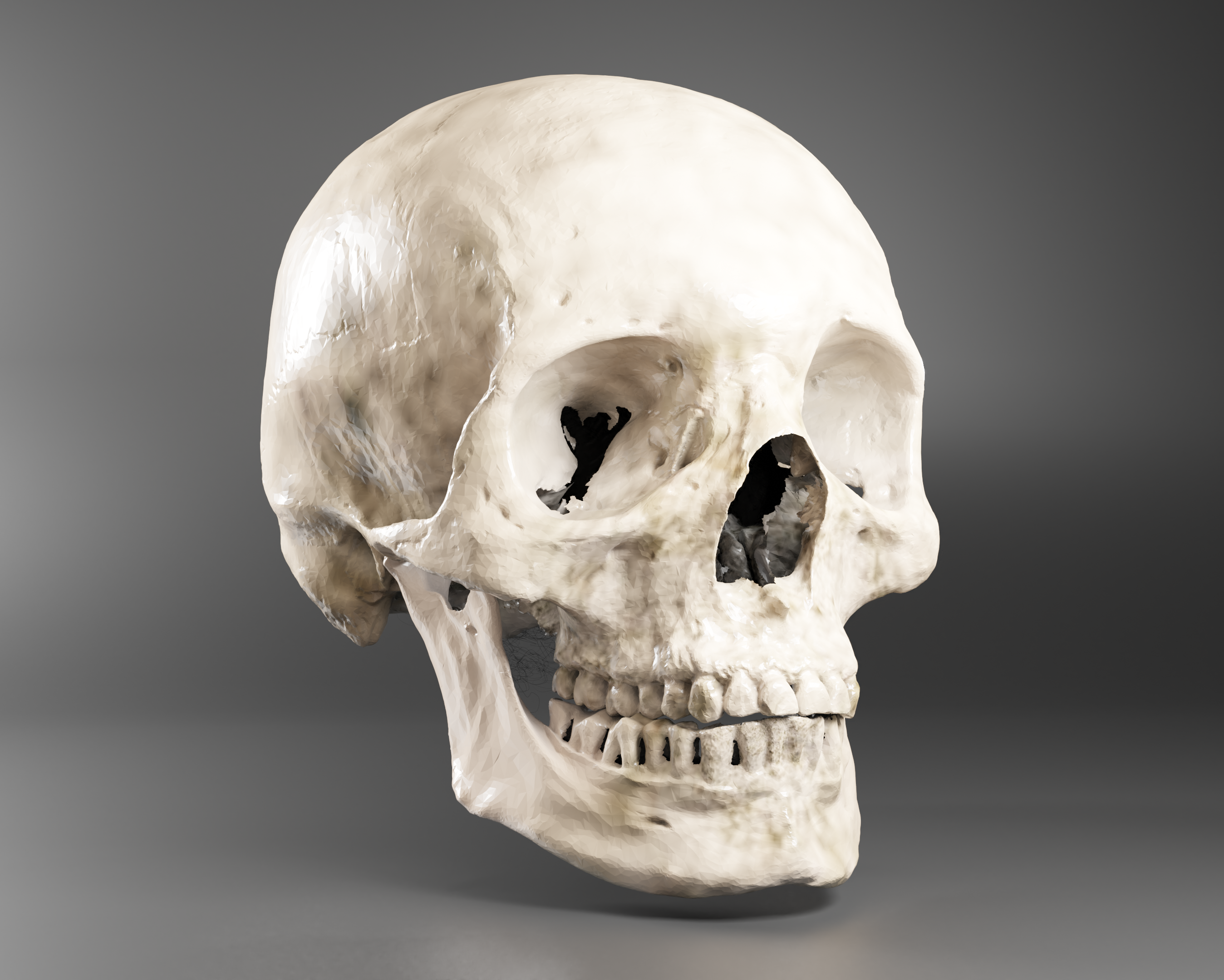 3D scan of a skull